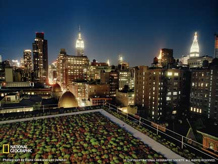 green-roof-nyc-1212052-sw