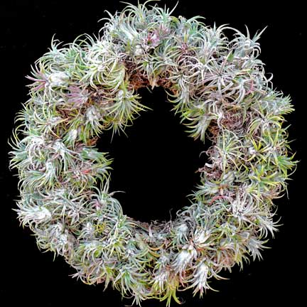 tillandsia_wreath
