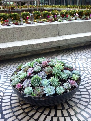 San Francisco Succulents