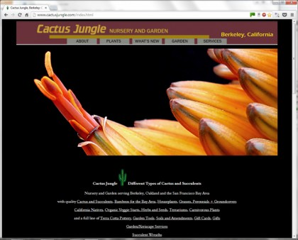 cactus jungle website